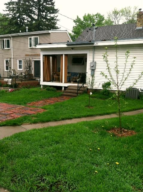 Backyard During 2