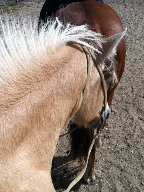 My horse, Bob.