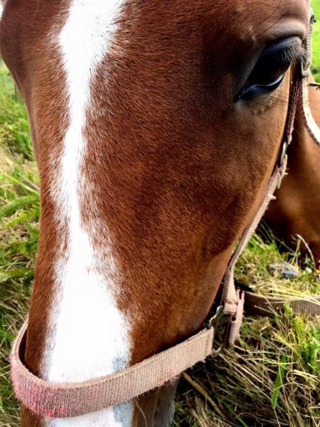 Horse Doolin 1