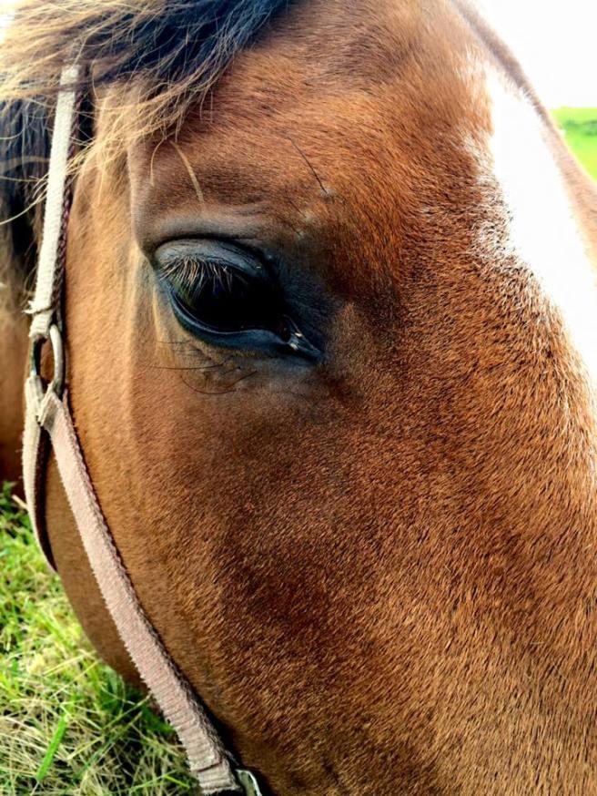 Horse Doolin 2