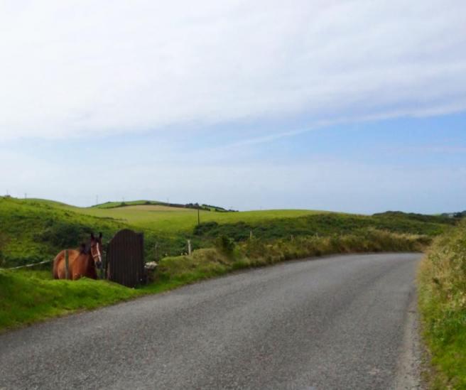 Horse Doolin 5